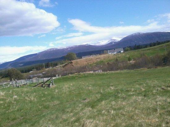 Zip Trek Park Aviemore: View from end of the zip course