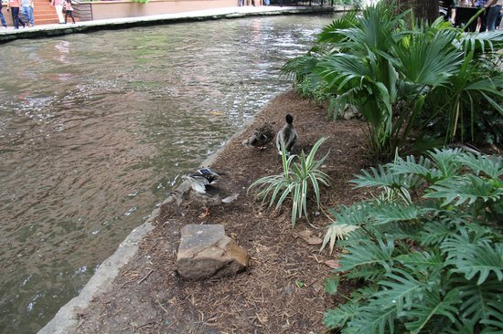 Hyatt Place San Antonio/Riverwalk: River walk