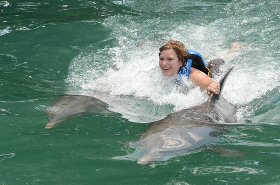Dolphin Discovery Tortola: Dorsal Swim