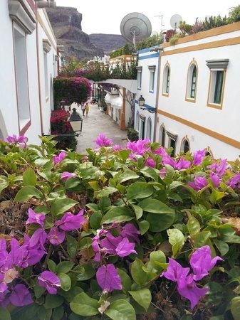 Marina Apartments: Street view