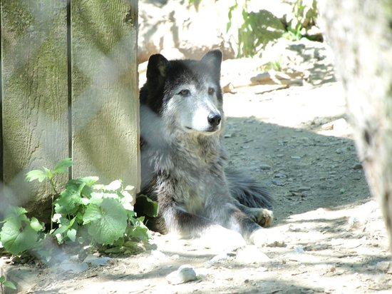 Wolf Sanctuary of PA: Loci of the Six Pack
