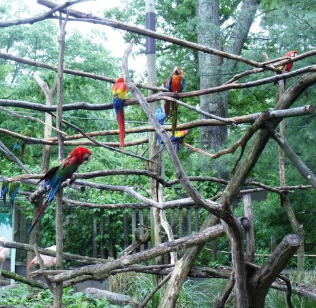 Catoctin Wildlife Preserve and Zoo: Parrot area