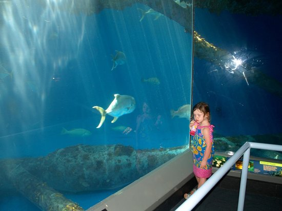 Shark Fish Tank Floor To Ceiling Viewing Area Picture Of Texas