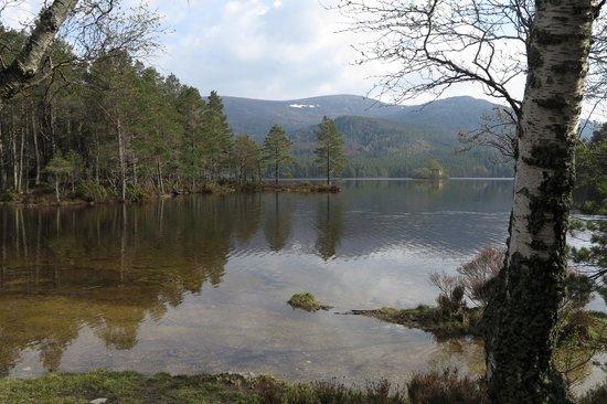 Loch an Eilein: Beautiful