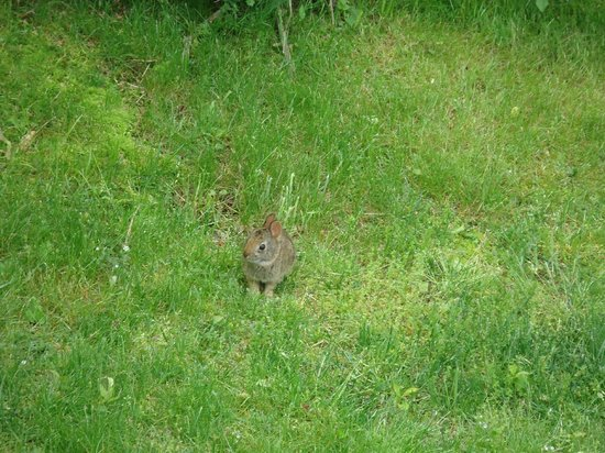 Green Briar Nature Center and Jam Kitchen: Lots of critters to see