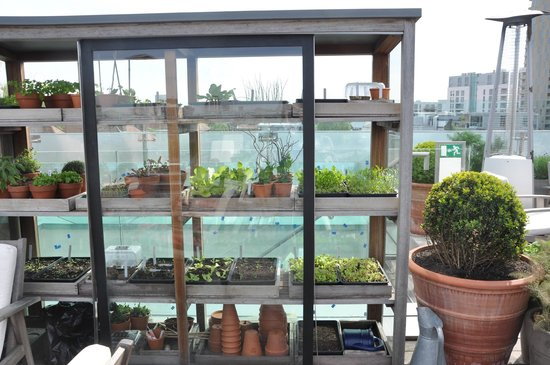 The Boundary Restaurant: roof top fresh herbs