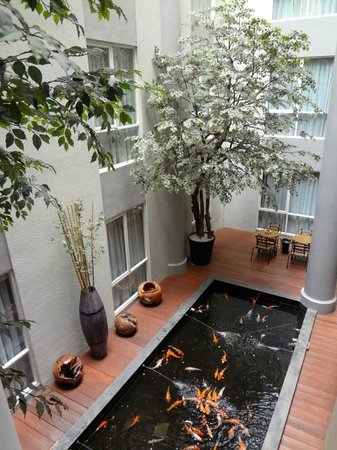 Avissa Suites: koi pond