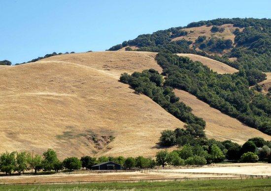 Bennett Valley : Golden grass and green trees.