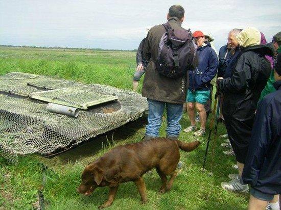 Decouvrons la Baie de Somme Day Tours : la chasse à la hutte dans la baie