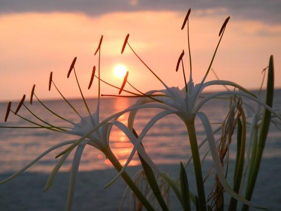 Nirvana on the Beach : great sunset every night