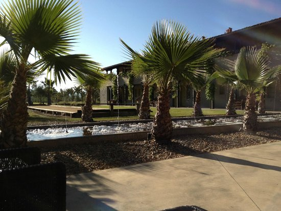 Indian Springs Resort and Spa: View while enjoying morning coffee under a blanket on a lounger