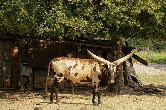 Huntsville, AL: More Animals