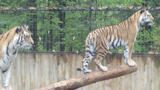 Ross Park Zoo