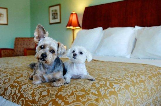 Baechtel Creek Inn: Premium Pet Friendly Room