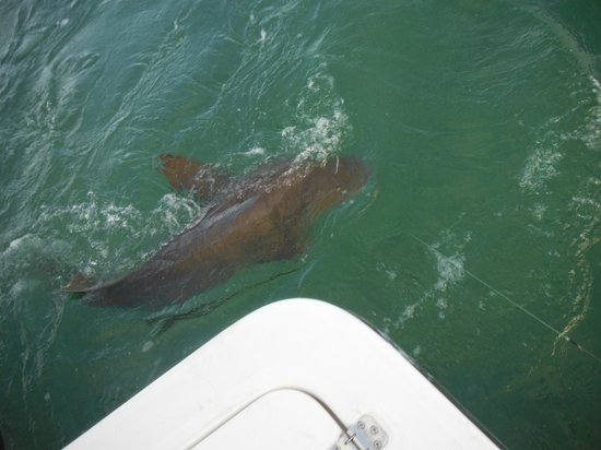 Genesis Charters Day Trips: First shark