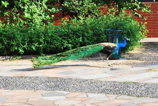 L'otel: @ the gardens