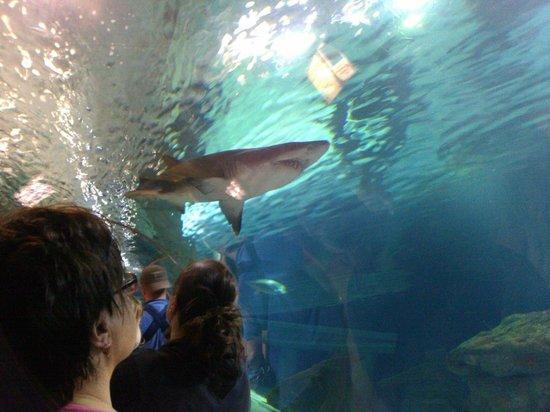 Shark Tank Picture Of Sea Life Minnesota Bloomington