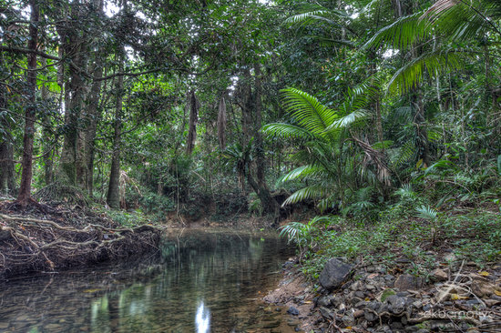 Daintree Wilderness Lodge: The creek at the lodge