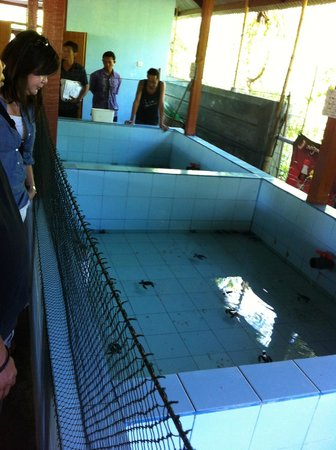 Turtle Conservation and Education Centre: Tanks of different turtle breeds