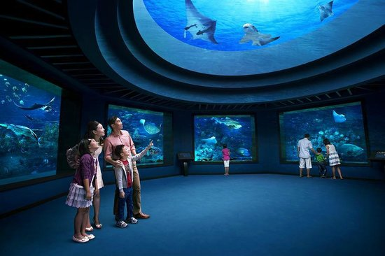 S E A Aquarium Sentosa Island 2018 All You Need To Know Before Go With Photos Singapore Tripadvisor