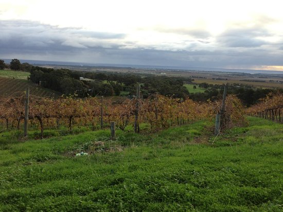 The Blue Grape Vineyard Accommodation: View from the top of the property