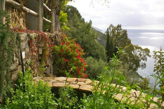 La Grotta dei Fichi: Beautiful flowering plants