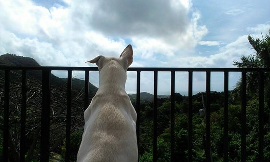 Dog's view from Ceiba Country Inn