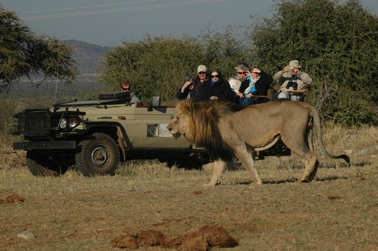 Tuningi Safari Lodge: Game viewing