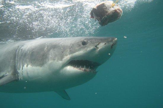 写真Shark Experience枚