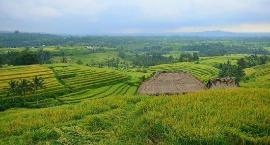 Soori Bali: Rice Terraces on Alila Journey, near Jatiluwih