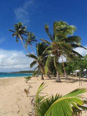 Taiana's Resort: Fresh Coconuts