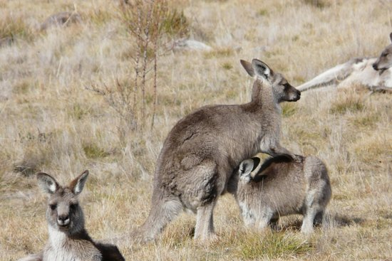 Namadgi National Park: Lunch time