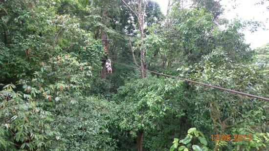 Termales Recreo Verde: Canopy dentro del bosque