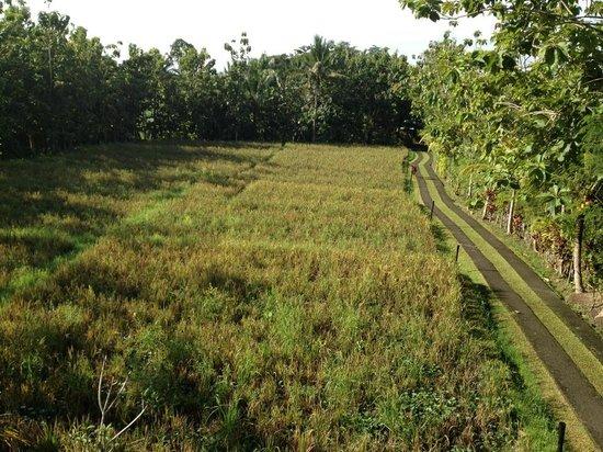 Alam Shanti: view