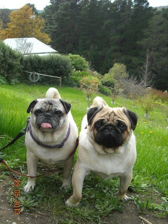 Basket Range, Australia: Our Pugs loved it there!