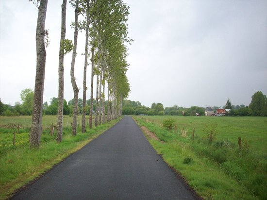 Les Cresnays, Frankrig: Where the horses are, I love the tree lined road this is just round the corner from the Gite