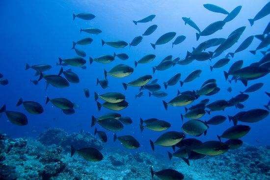 Blues Diving Centre : OCEAN INDIEN- BLUES