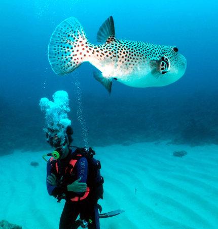 Blues Diving Centre : RENCONTRE