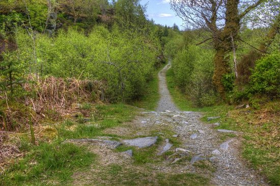 Gwydir Forest: nice path for biking