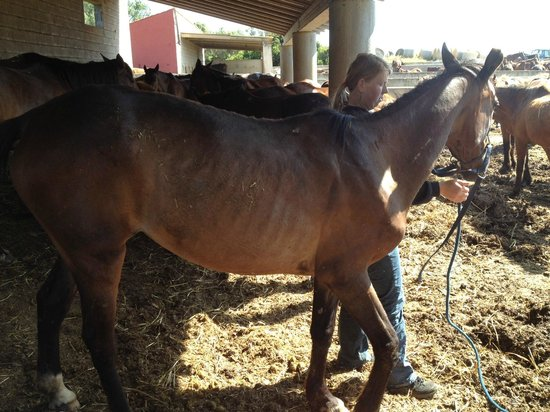 Rancho Grande : This underweight horse was taken away to be saddled up to be ridden