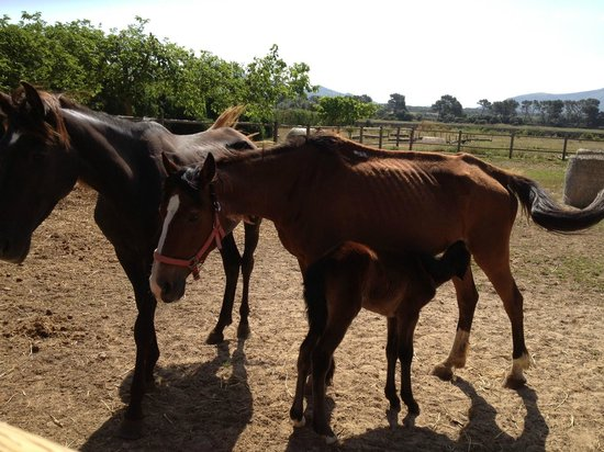 Rancho Grande : Three brood mares in a pen with no water and virtually starving