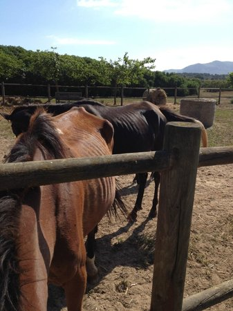 Rancho Grande : Two of the mares with foals at foot - both severely underweight