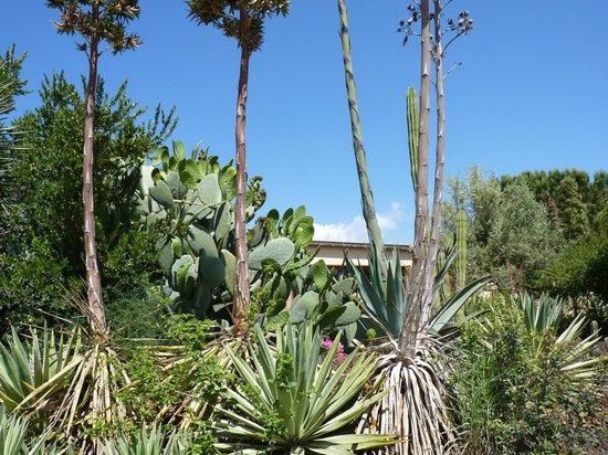 VOI Arenella resort: le jardin de cactus