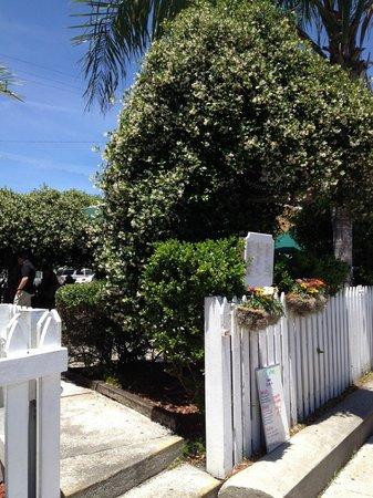 O.C. White's Seafood & Spirits : Jasmine next to gate entering courtyard/restaurant