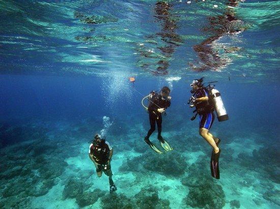 Diversia Diving: <3