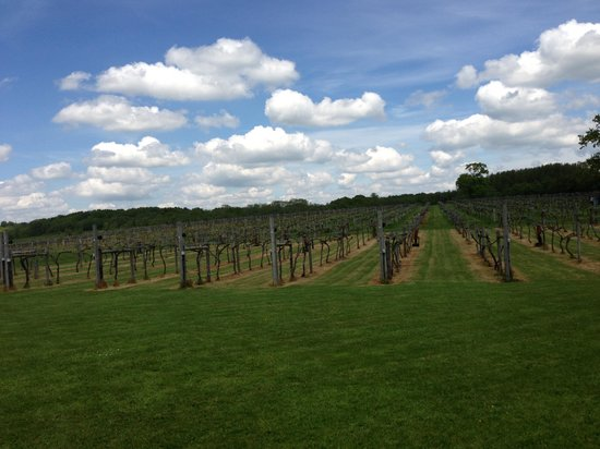Wickham Vineyard: Lovely Setting