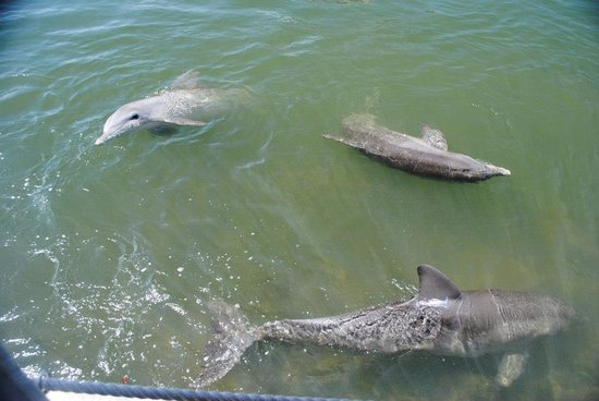 Dolphin Research Center : A few of the dolphins.