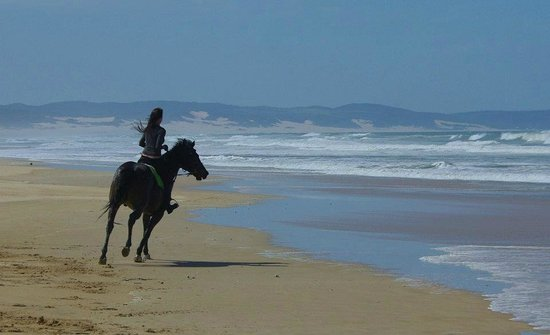 Supertubes Guesthouse: Papiesfontein beach horse rides - Activities