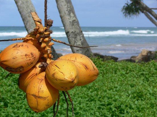 Templeberg Villa: King coconut