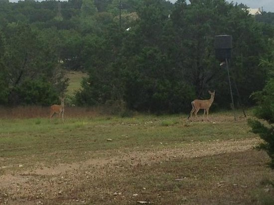 ‪‪Villas in the Wimberley Hills‬: Deer coming to the feeder.‬